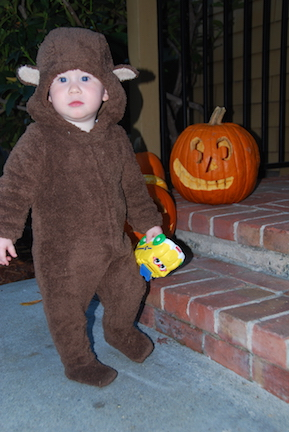 Our little brown bear wondering why the pumpkin has such a big grin.