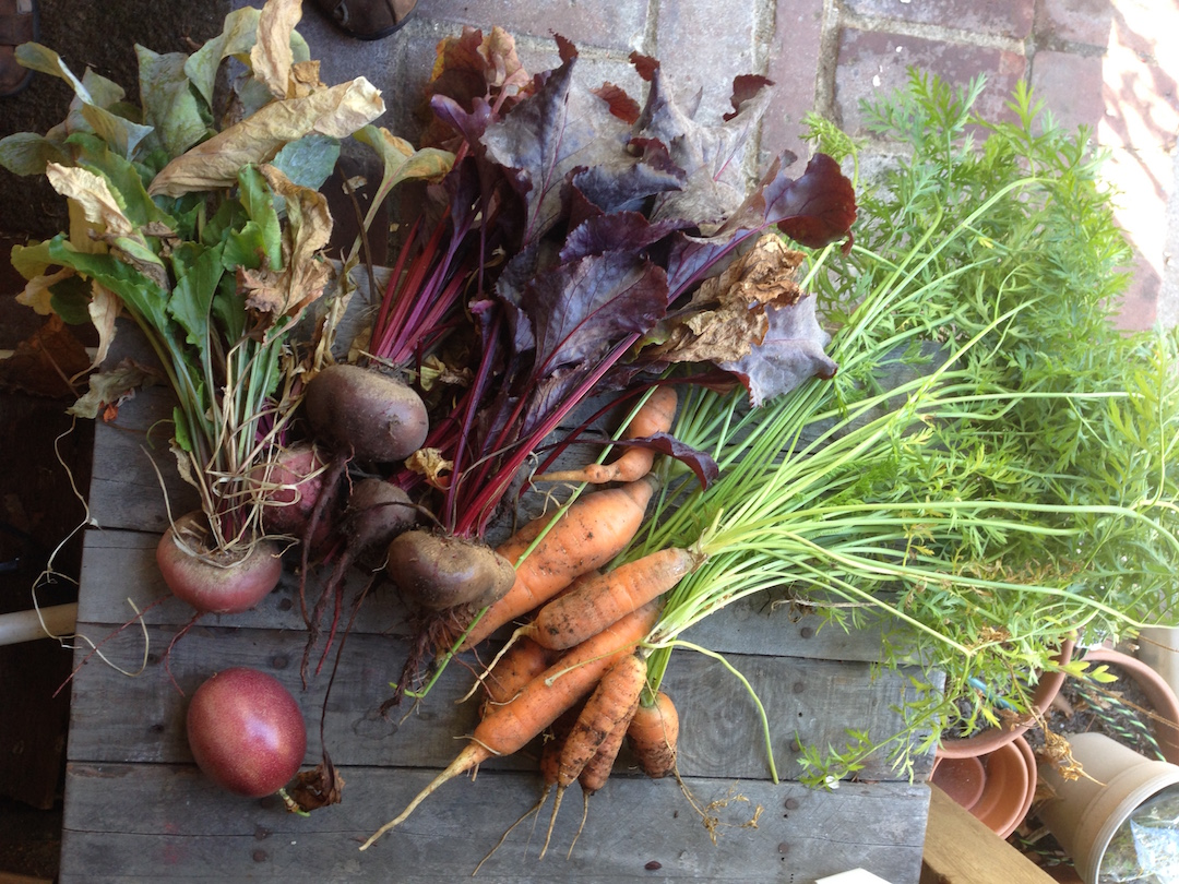 Our Garden Almanac -- September 3, 2016